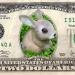 dollar_hase