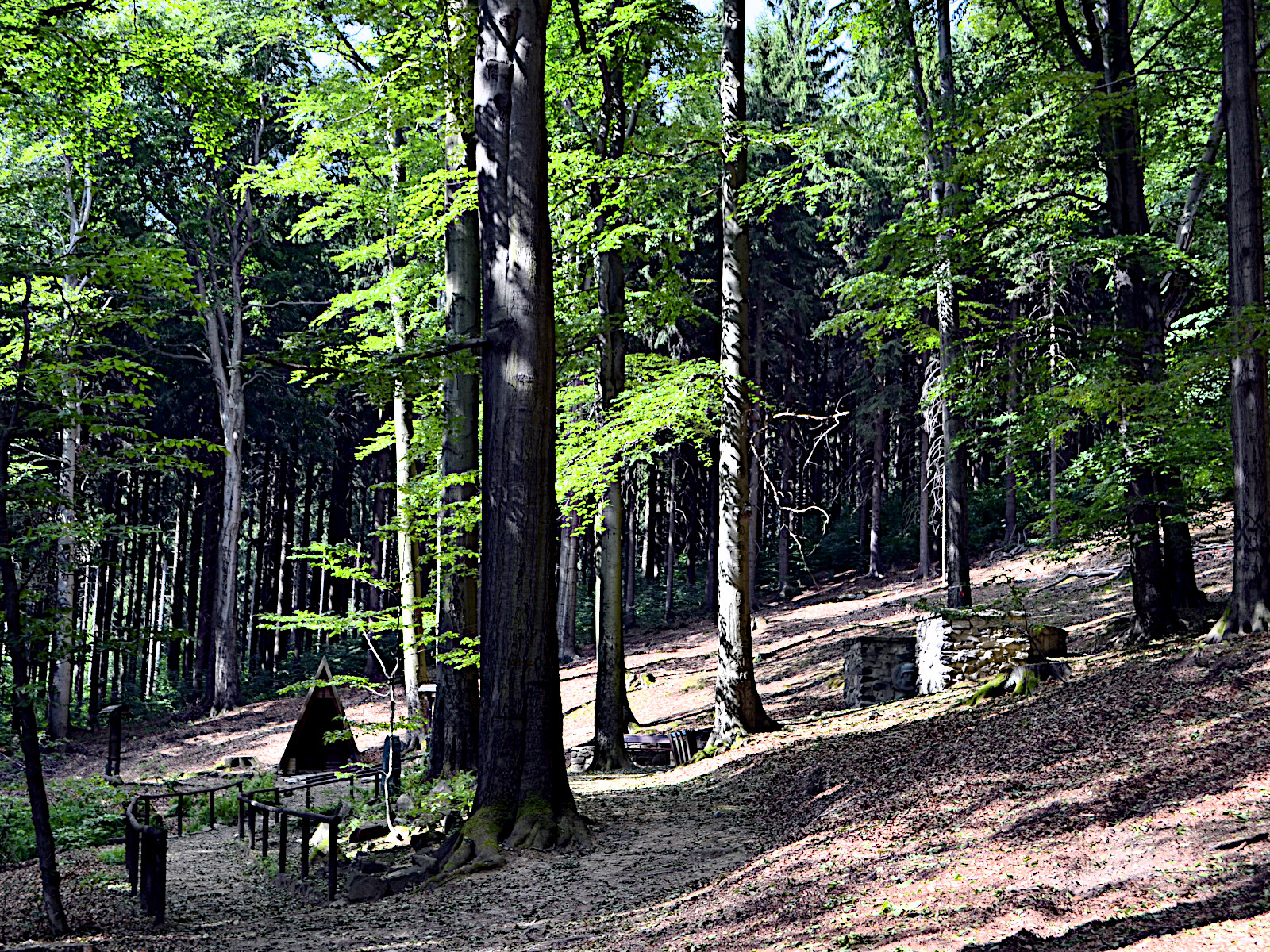 Lauter Bäumen
